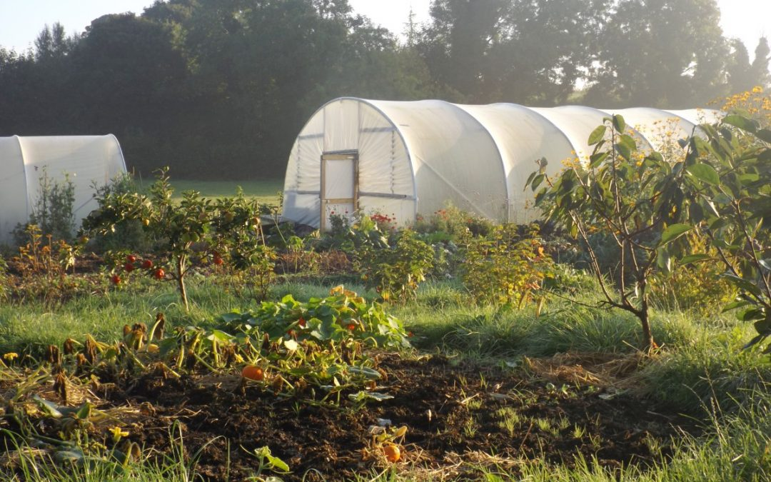 Polytunnels on the cheap (and not so cheap)