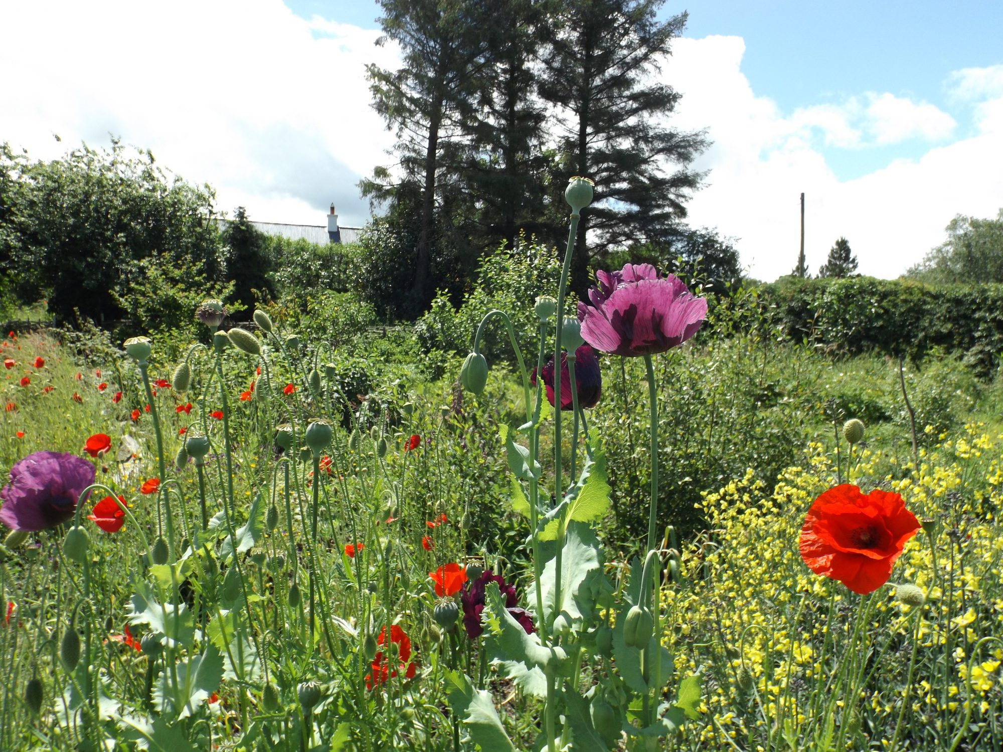 The gardens at Lackan Cottage Farm are a haven for wildlife