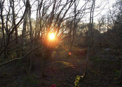 Sunset in the birchwoods