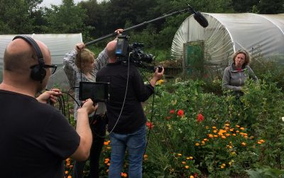 A filming day, and the garden makeover continues